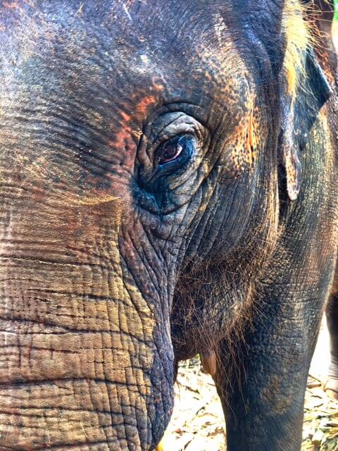 Elephant-Conservation-Is-Important-eyes
