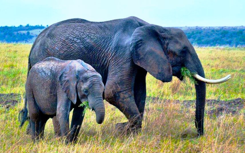 Elephant-Conservation-Is-Important-Mara