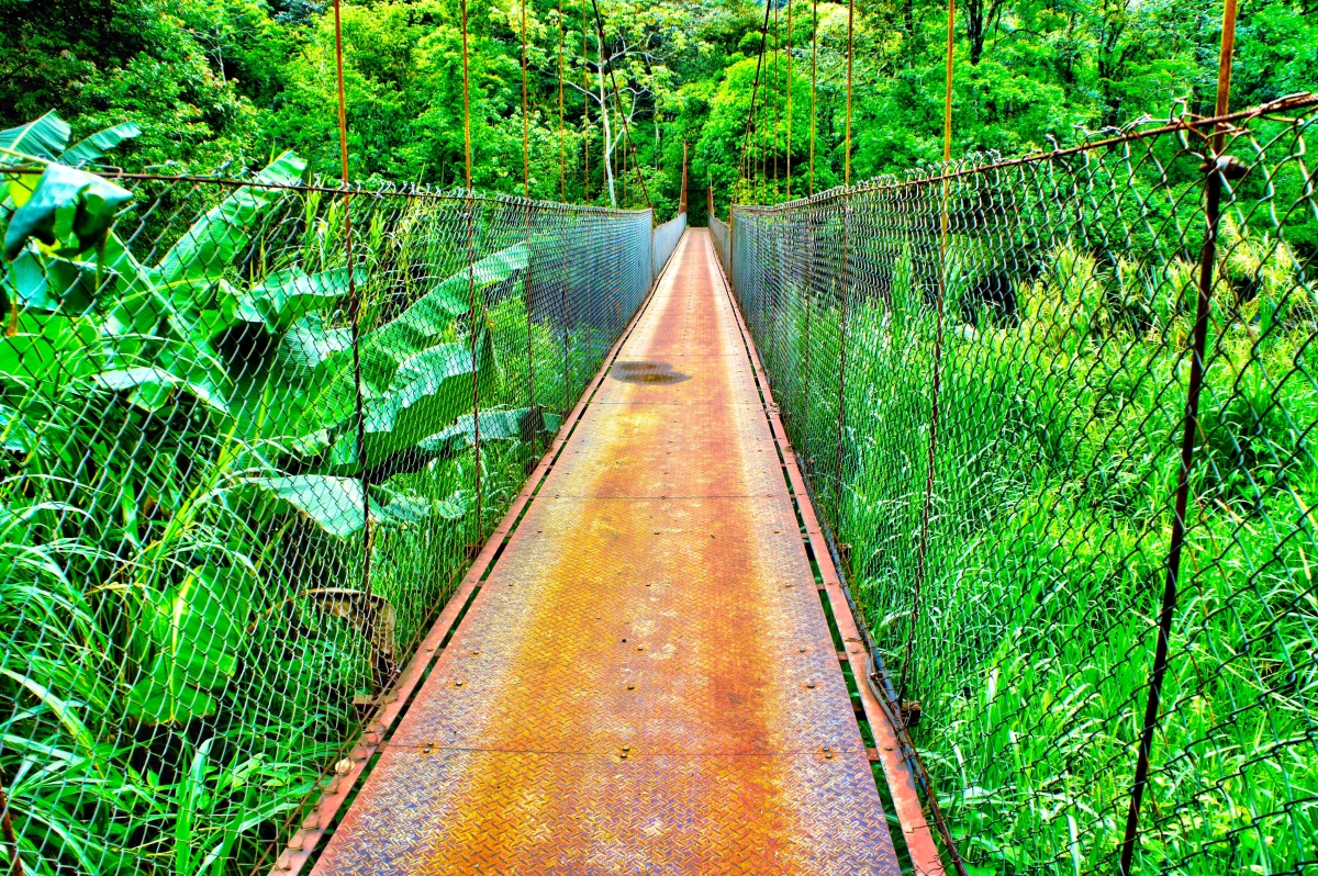 adventure-life-lessons-bridge-jungle