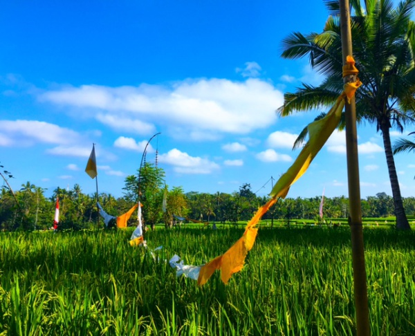 blog-Choose-Yourself-Today- New-Yoga-&-Life-Coaching-Retreat-in-Bali-flags-rice-paddy .jpg