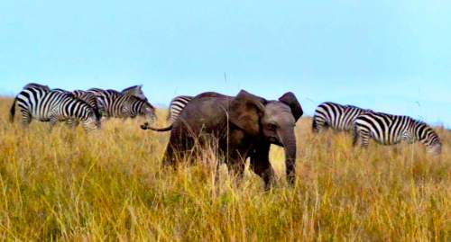 blog-Why-I-Stopped-Counting-Countries-and-Started-Collecting-Experiences-elephant.jpg