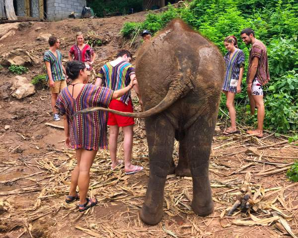 blog-Announcing-Our-Newest-Location-Thailand-elephants.jpg