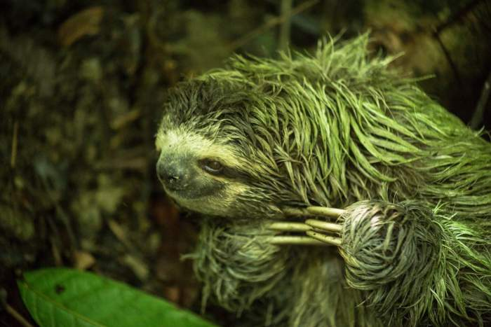 blog-Why-Our-Community-Is-More-Important-Now-Than-Ever-Before-sloth.jpg