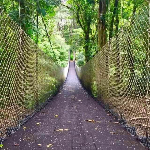 hanging-bridge-in-costa-rica