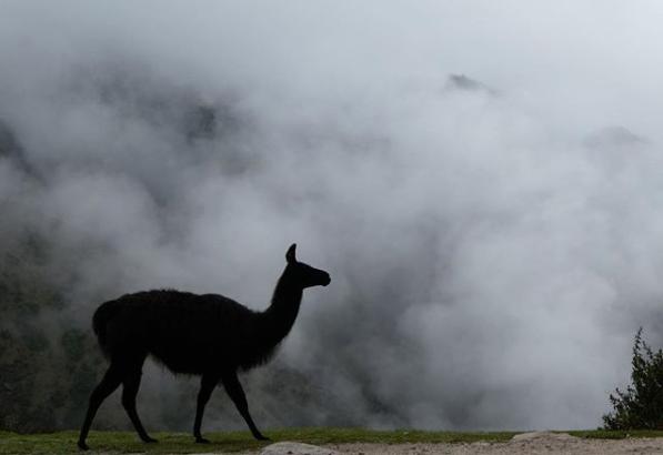 inca-trail-llama