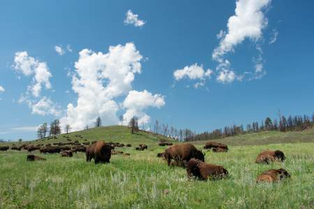 Best of the midwestern United States parks, Custer State Park