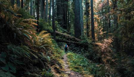Redwood National Park hiking, camping in United States