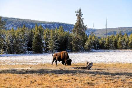Top Hikes in Yellowstone National Park