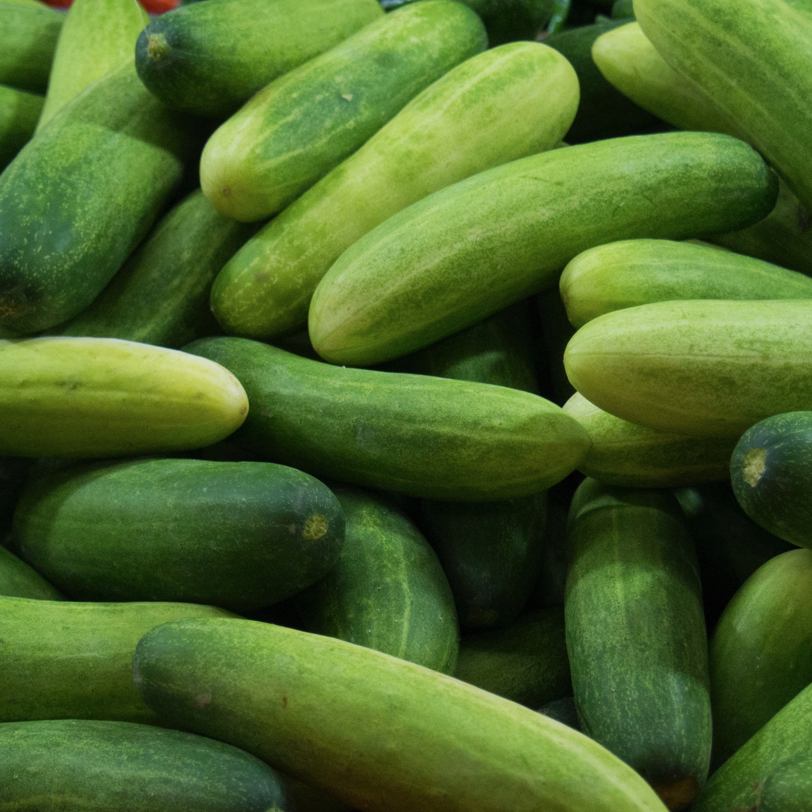 Jersey Cucumber (2 Pack)