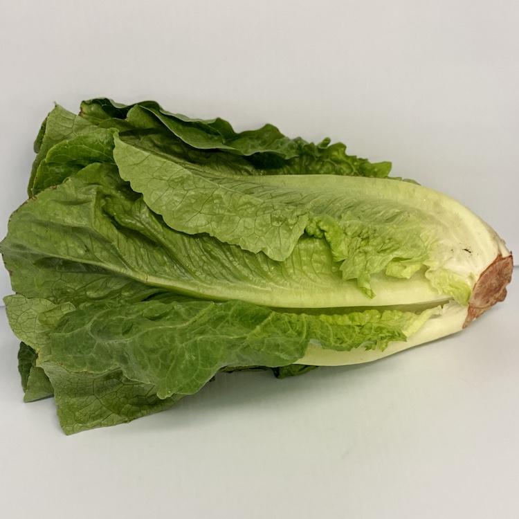 Jersey Romaine Lettuce