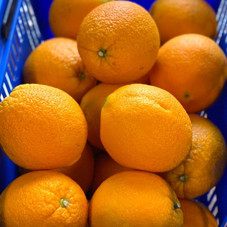 Naval Oranges (2 Pack)