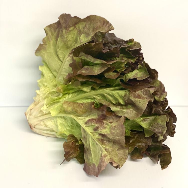 Jersey Leaf Lettuce