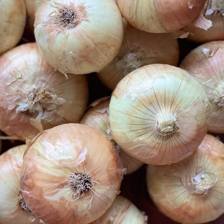 Yellow Onion (Pack of 3)