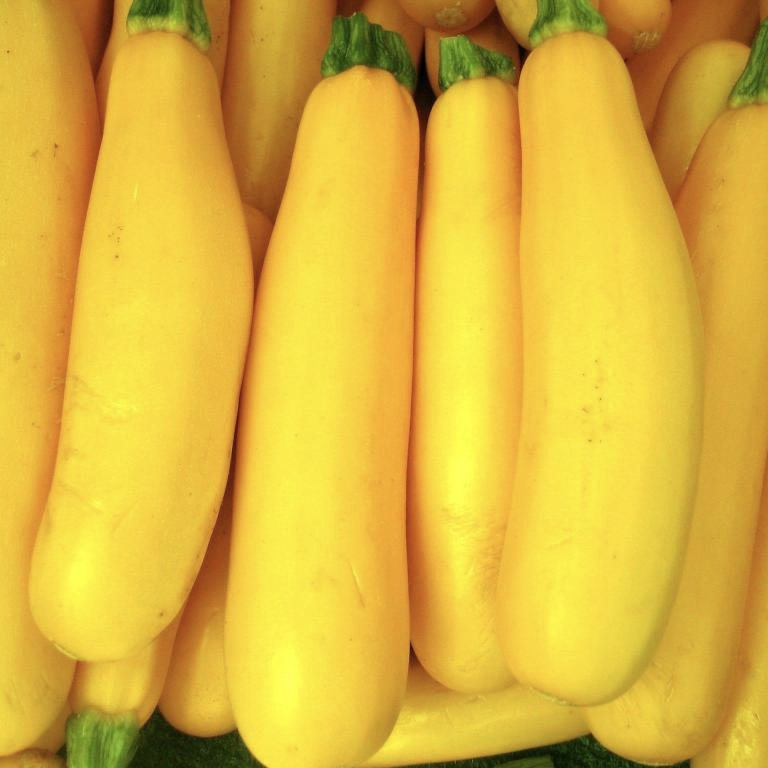 Jersey Yellow Squash (2 Pack)