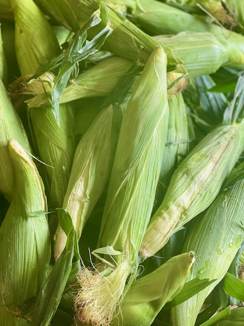 Jersey White Corn