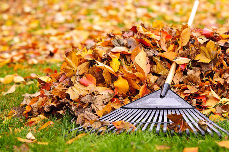 News: Newark Launches Fall Leaf Collection Program