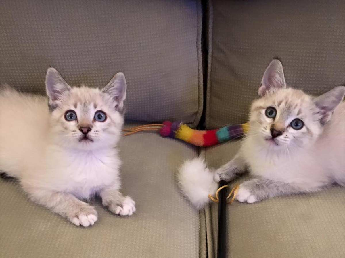 Vanilla and Miss Bean before FIP