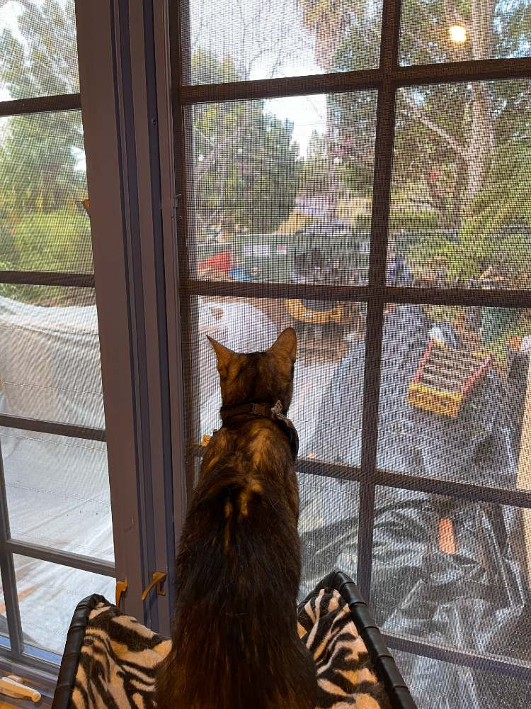 Smokey watching Cat Cave construction resume after rains
