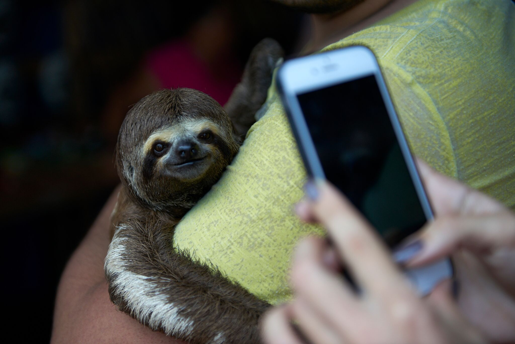 Taking a photo of a sloth