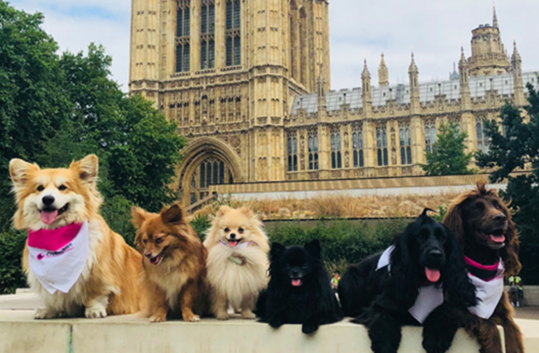Different dogs sit outside Parliament