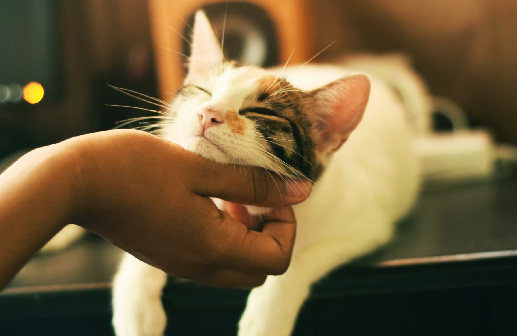 A cat gets a chin scratch from their human companion