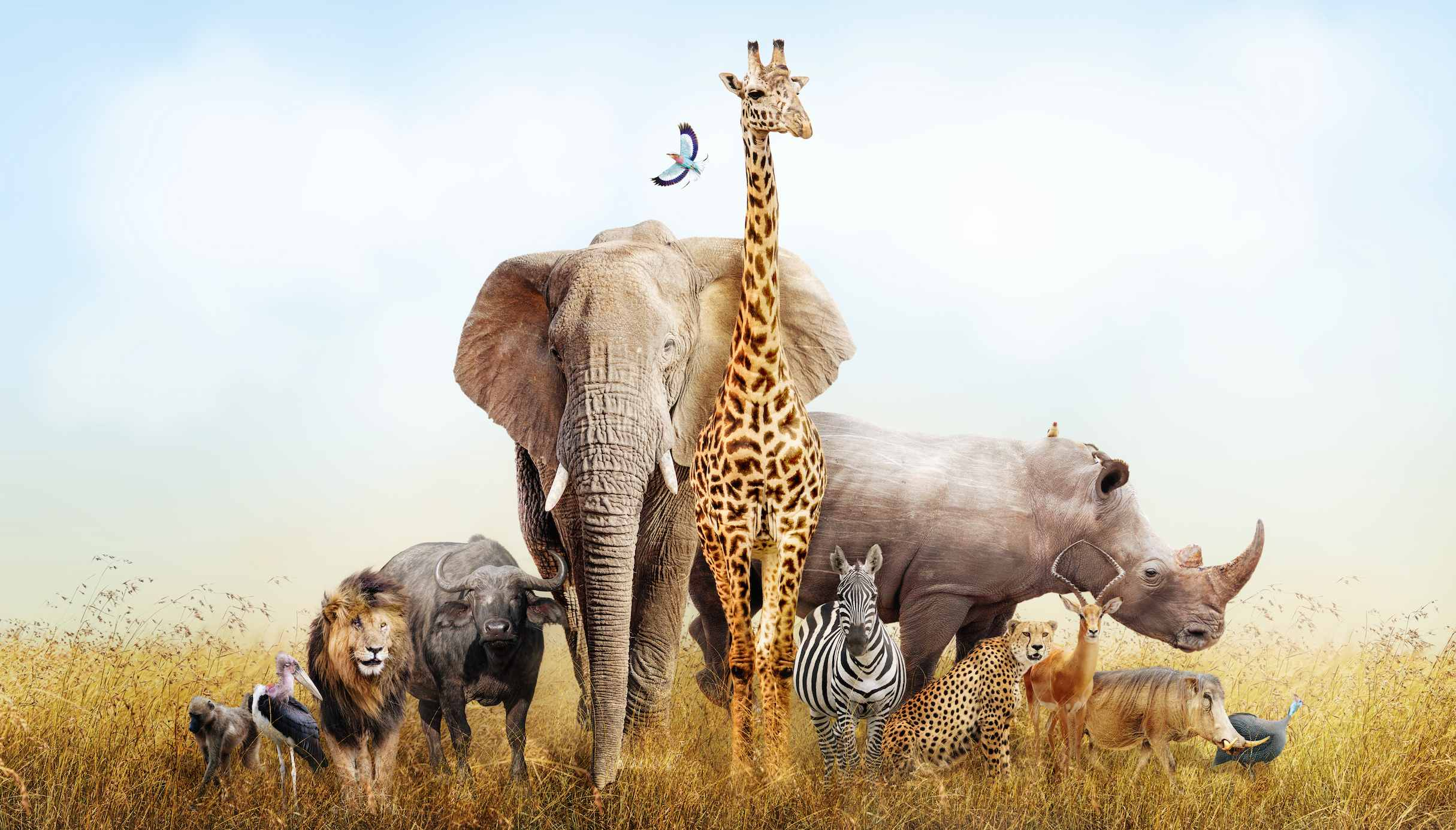 Wild animals including a giraffe, monkey, rhino, zebra, and buffalo