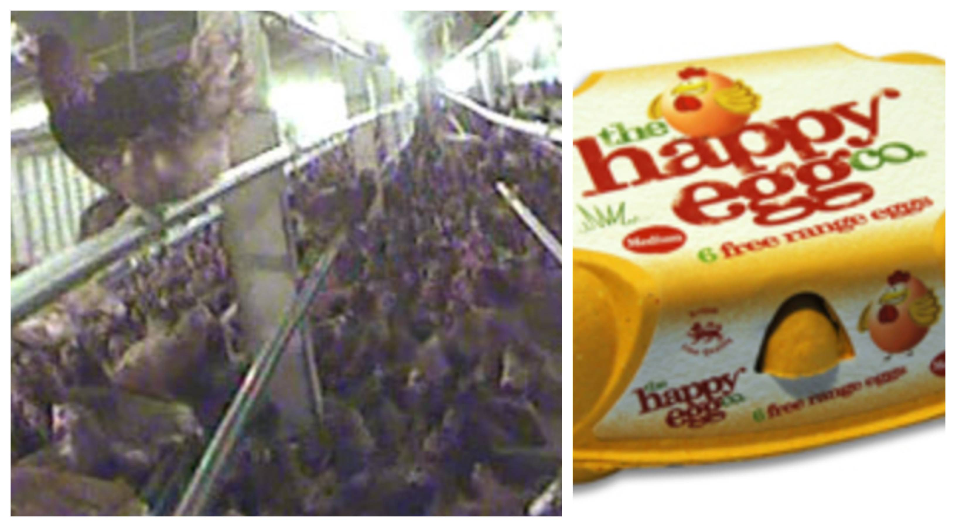 Undercover footage from the Happy Egg Co