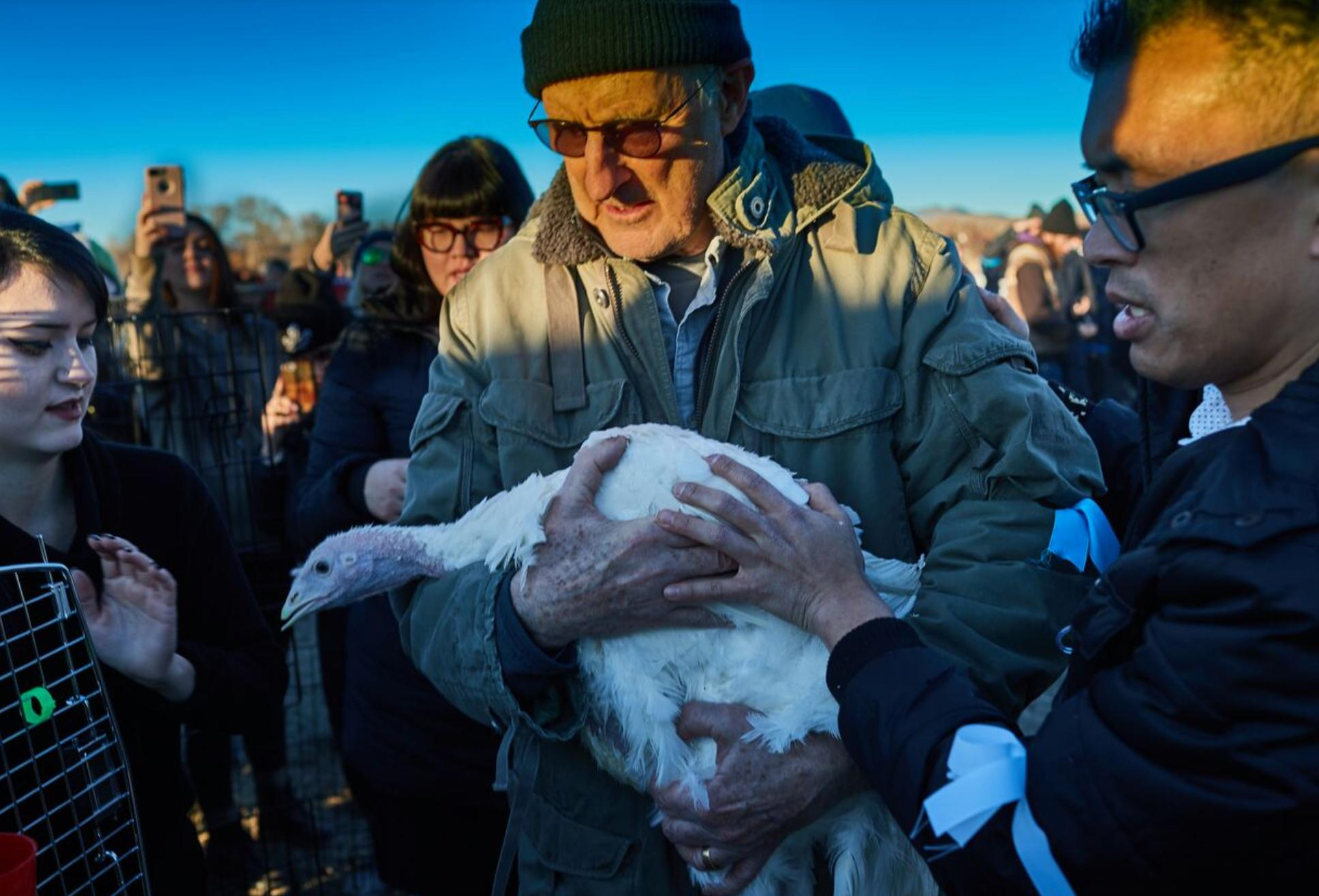 Vegan actorJames Cromwell rescues a turkey