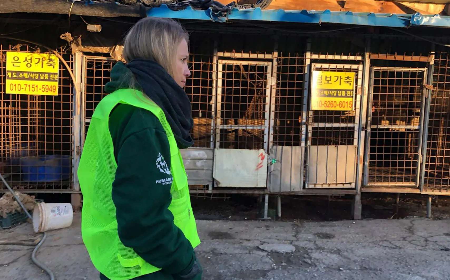 An activist with HSI at South Korea's biggest dog meat factory