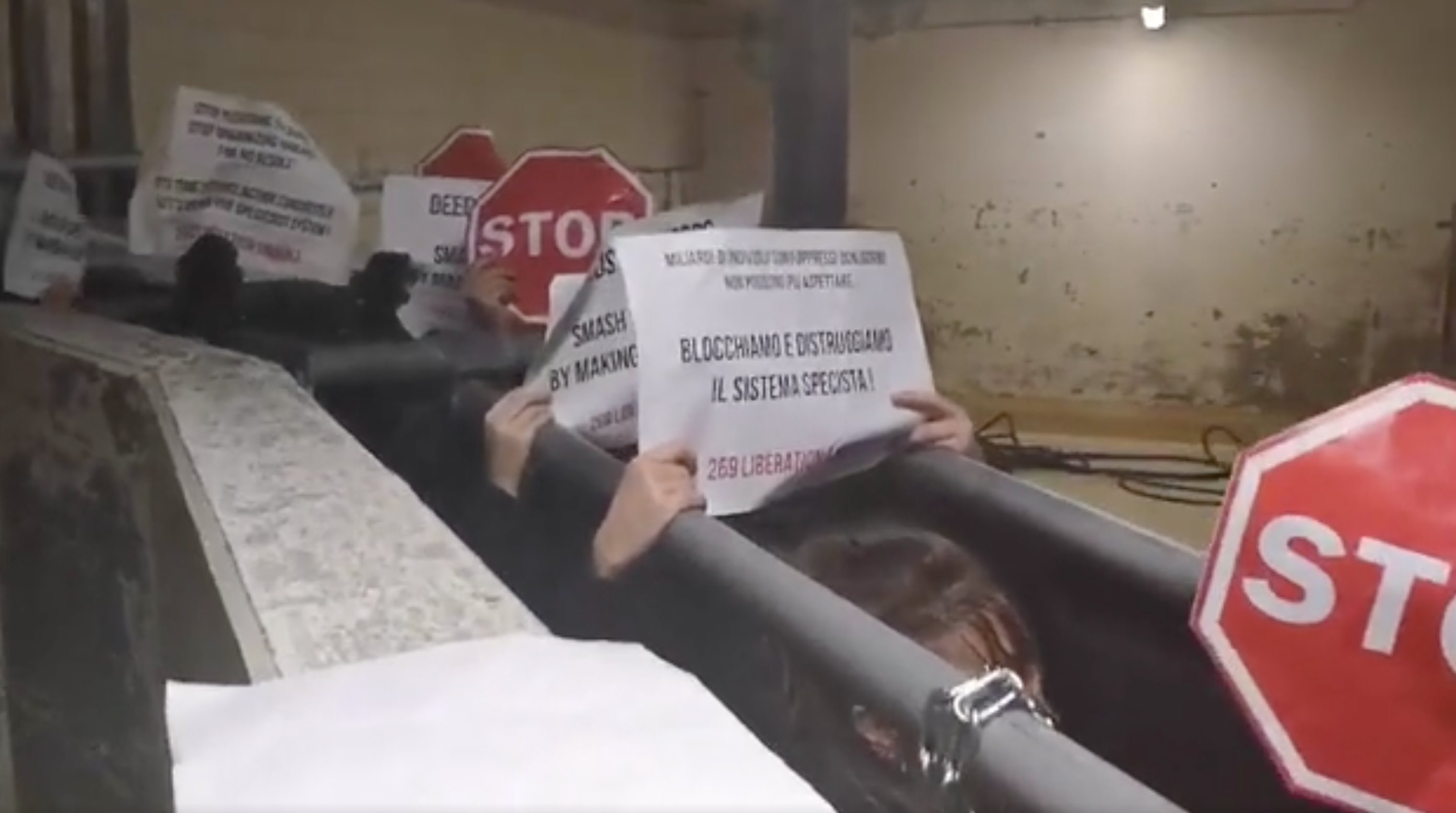 Vegan activists shut down a Swiss slaughterhouse