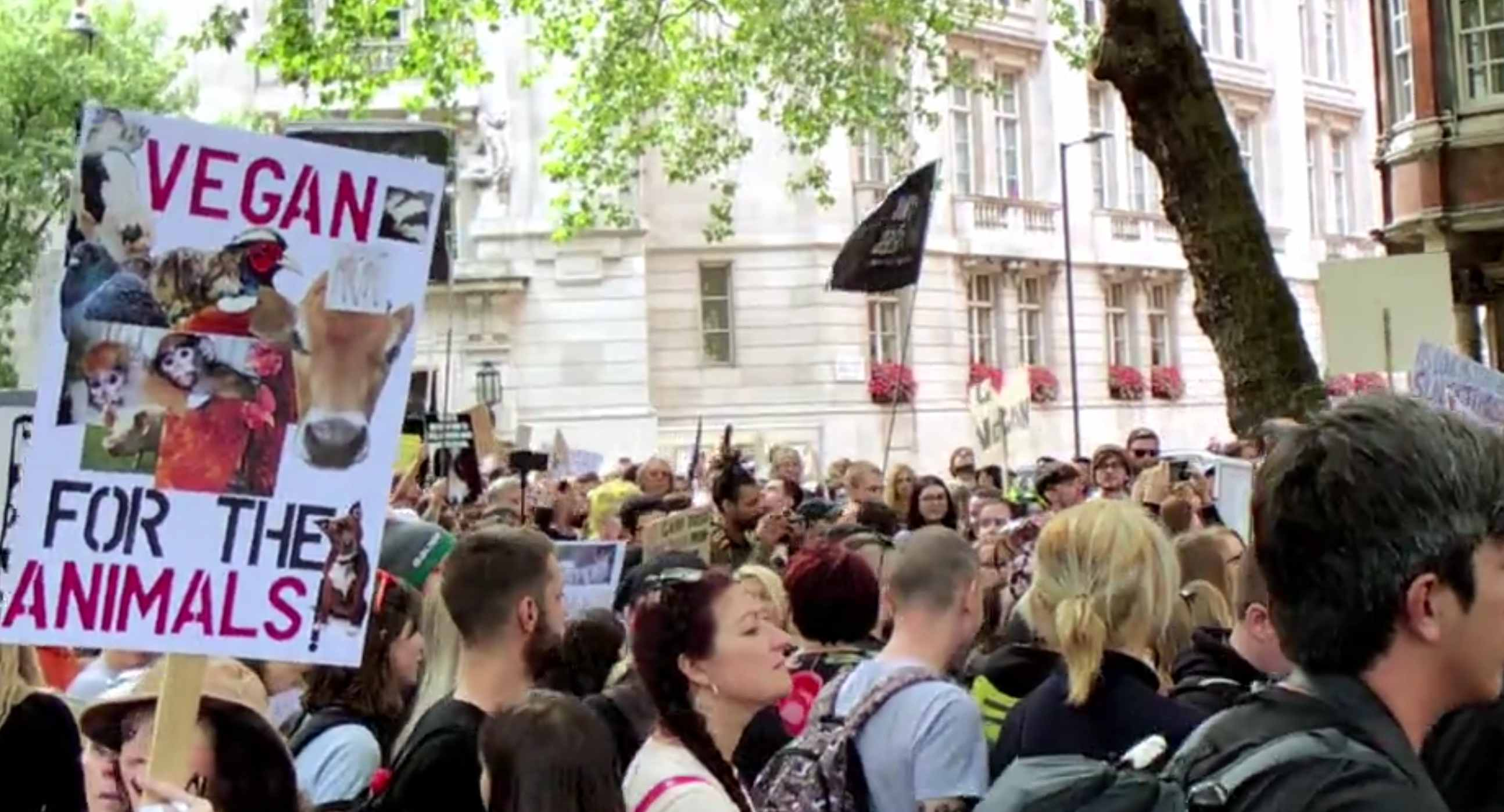 Animal Rights March 2018