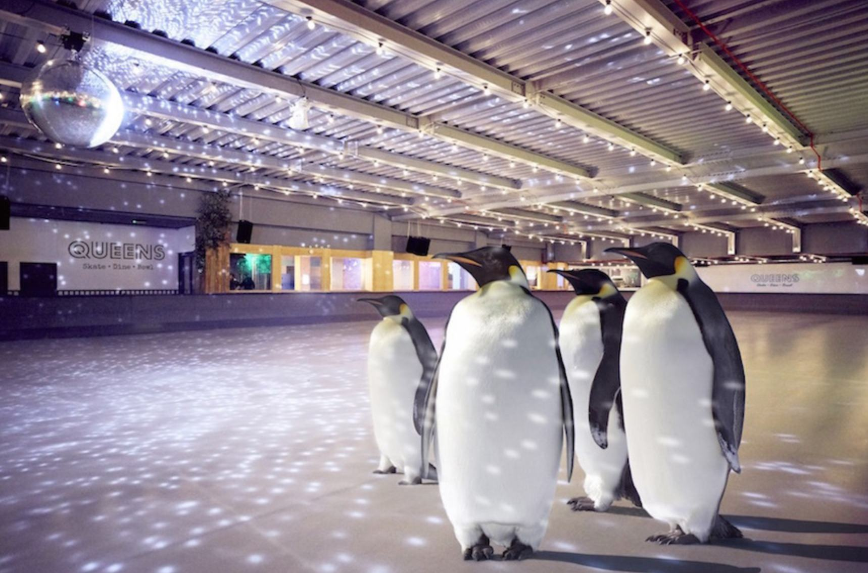 Ice-skating with pengins in London