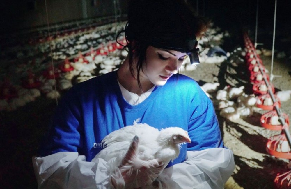 Vegan activist saves a chicken