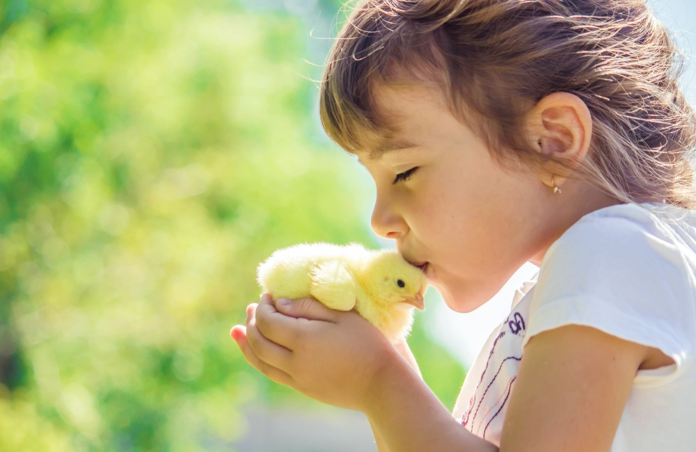 Child kisses chick