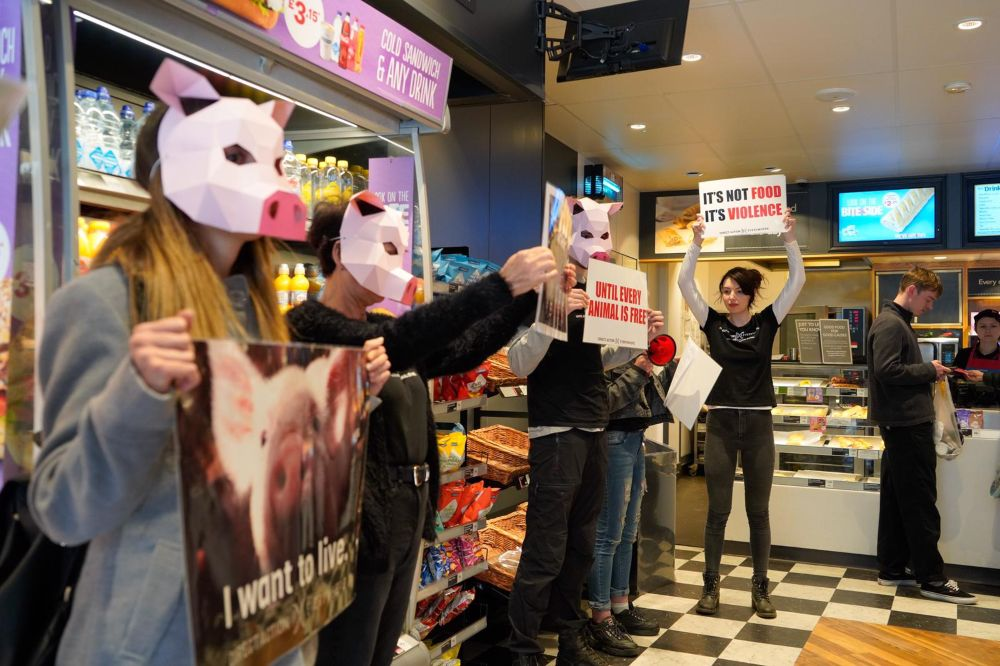 Greggs bakery is stormed by vegan activists