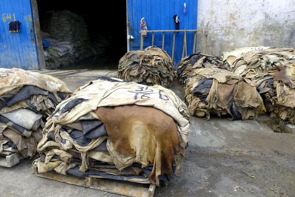 Cow hides at a leather tannery