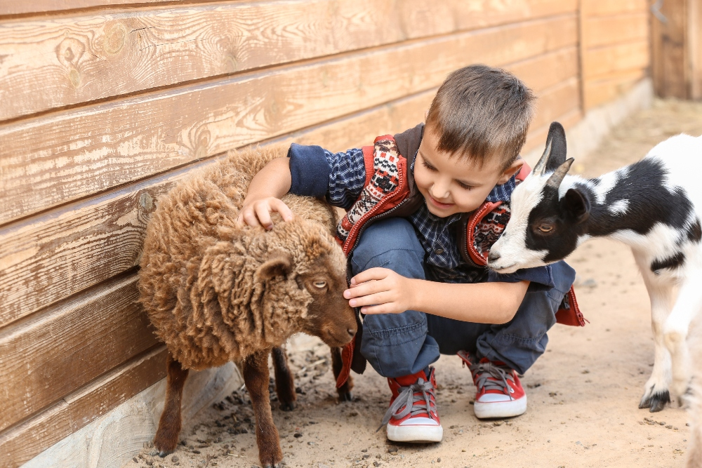 Boy with goat and sheep