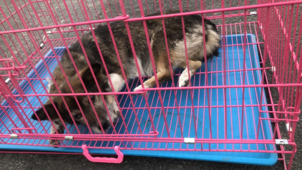Dog rescued from illegal slaughterhouse