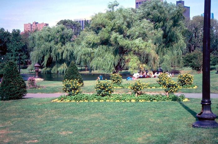 Boston Common & Public Gardens
