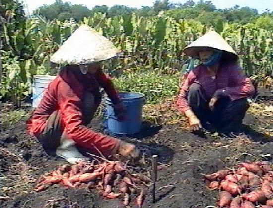 Vietnamese Farmers' Market
