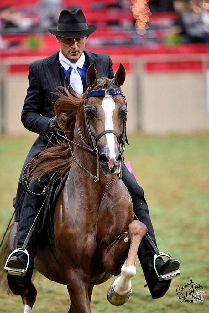This year, the Arabian Horse Association expects about 1,800 horses and nearly 1,200 owners from all 50 U.S. states and the Canadian provinces.