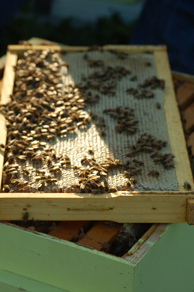 The Spencer family spends an estimated 50-plus hours annually tending to their bee friends, which includes checking for swarm cells throughout April, harvesting twice a year, and winterizing the hives in late fall. (Photo: Jennifer Zehnder)
