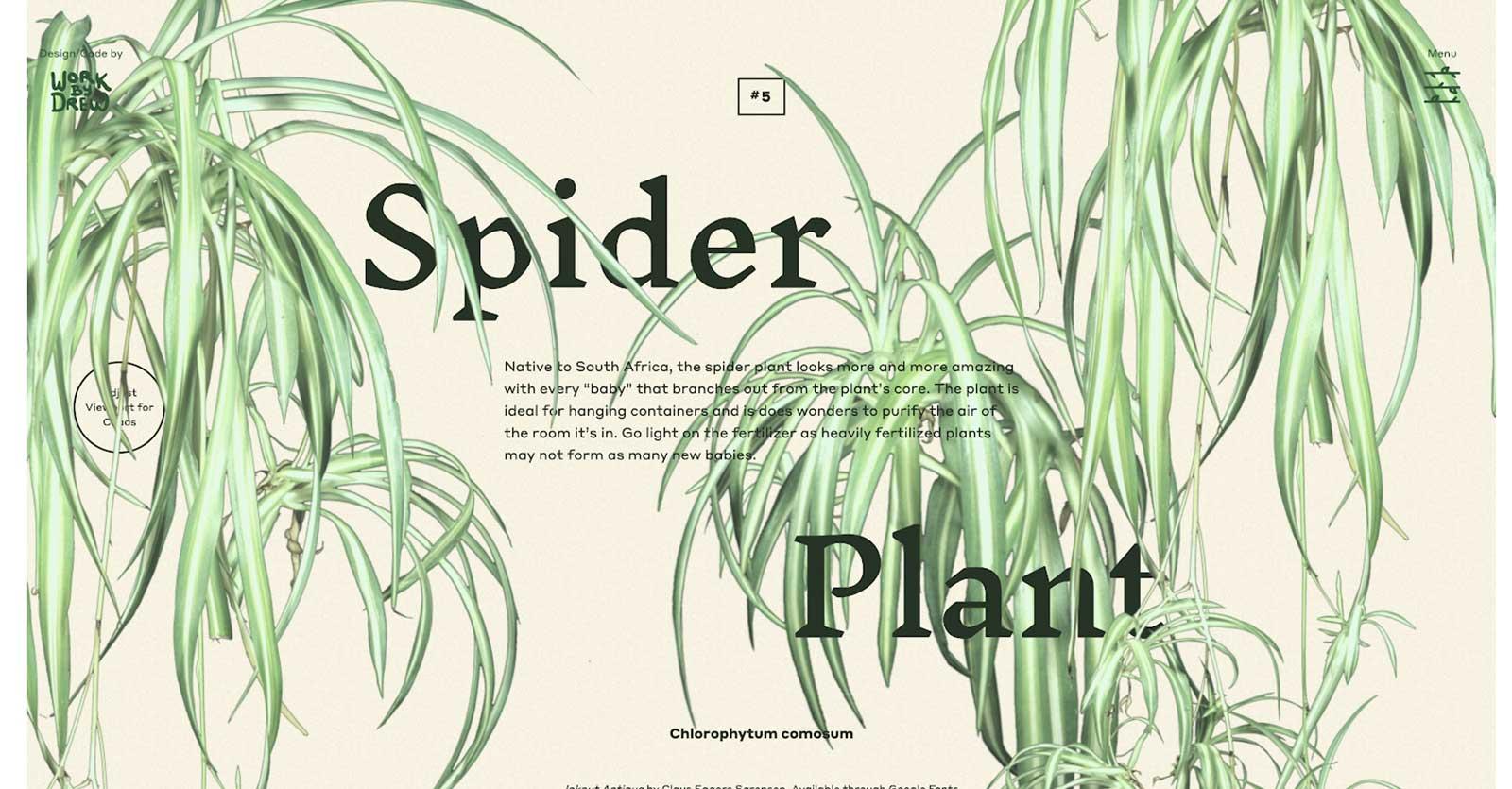 eleven plants for dum dum