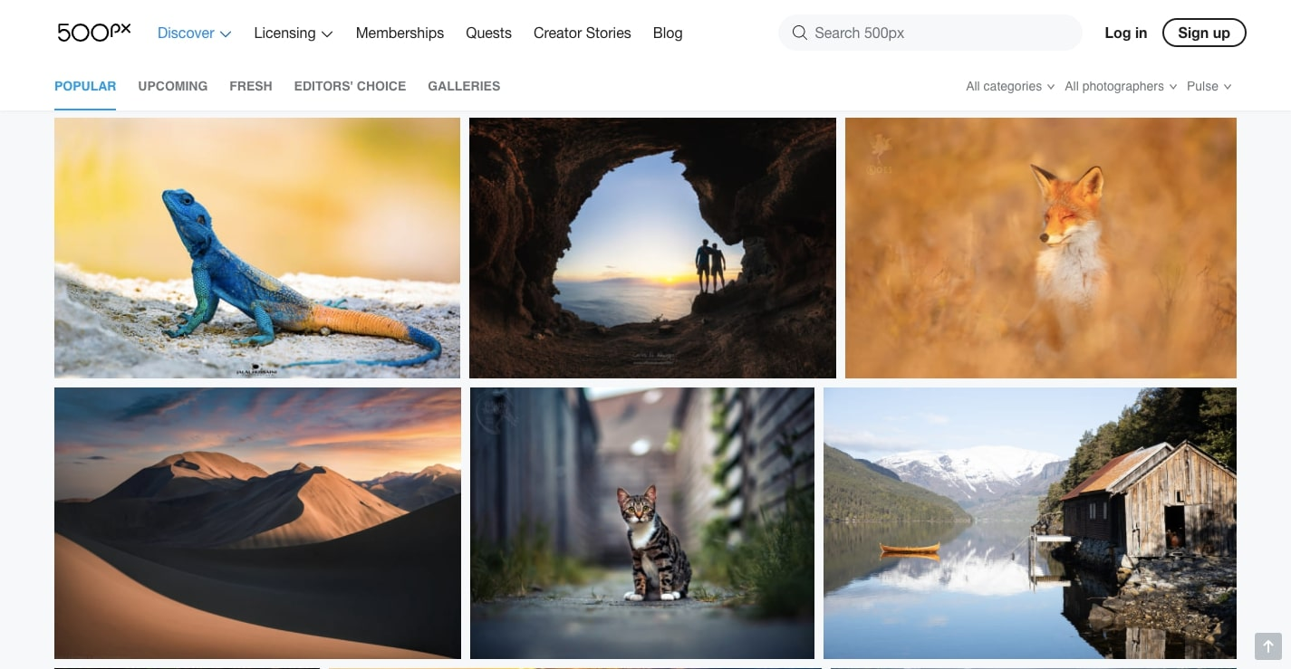 nature and animals stock photos