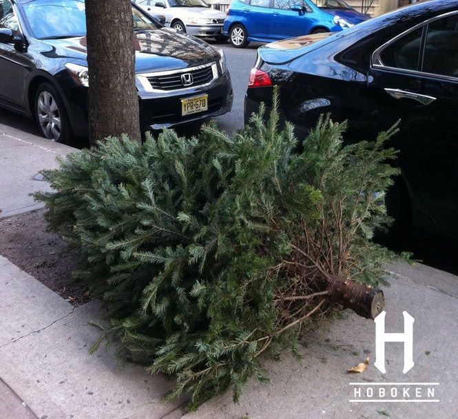 Disposing Of Christmas Trees: Christmas Tree Disposal Information