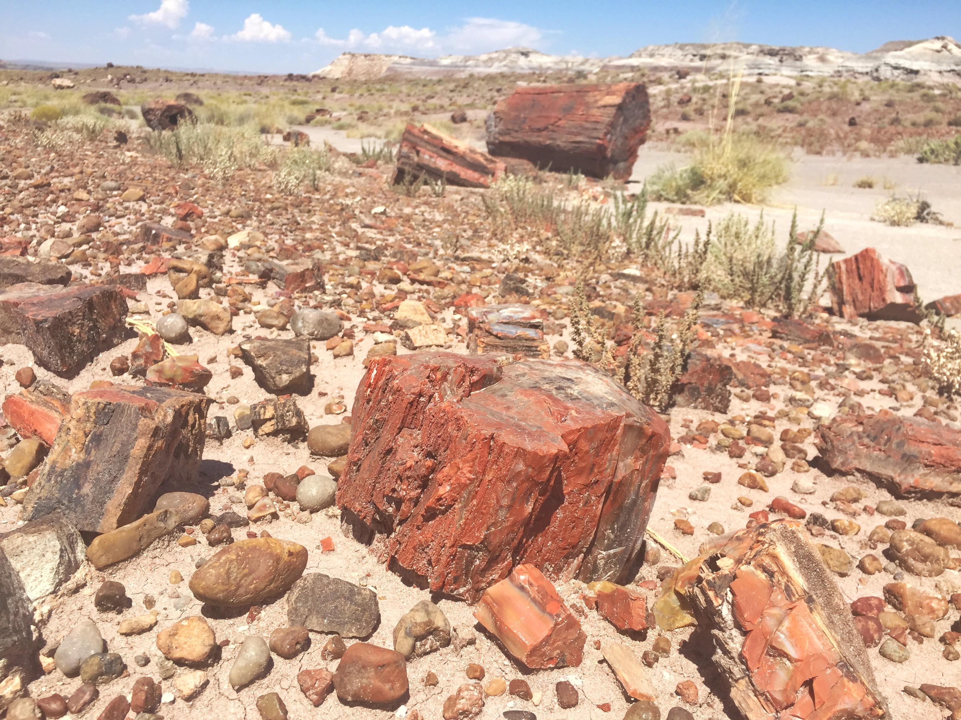 2. Park Road, Petrified Forest National Park