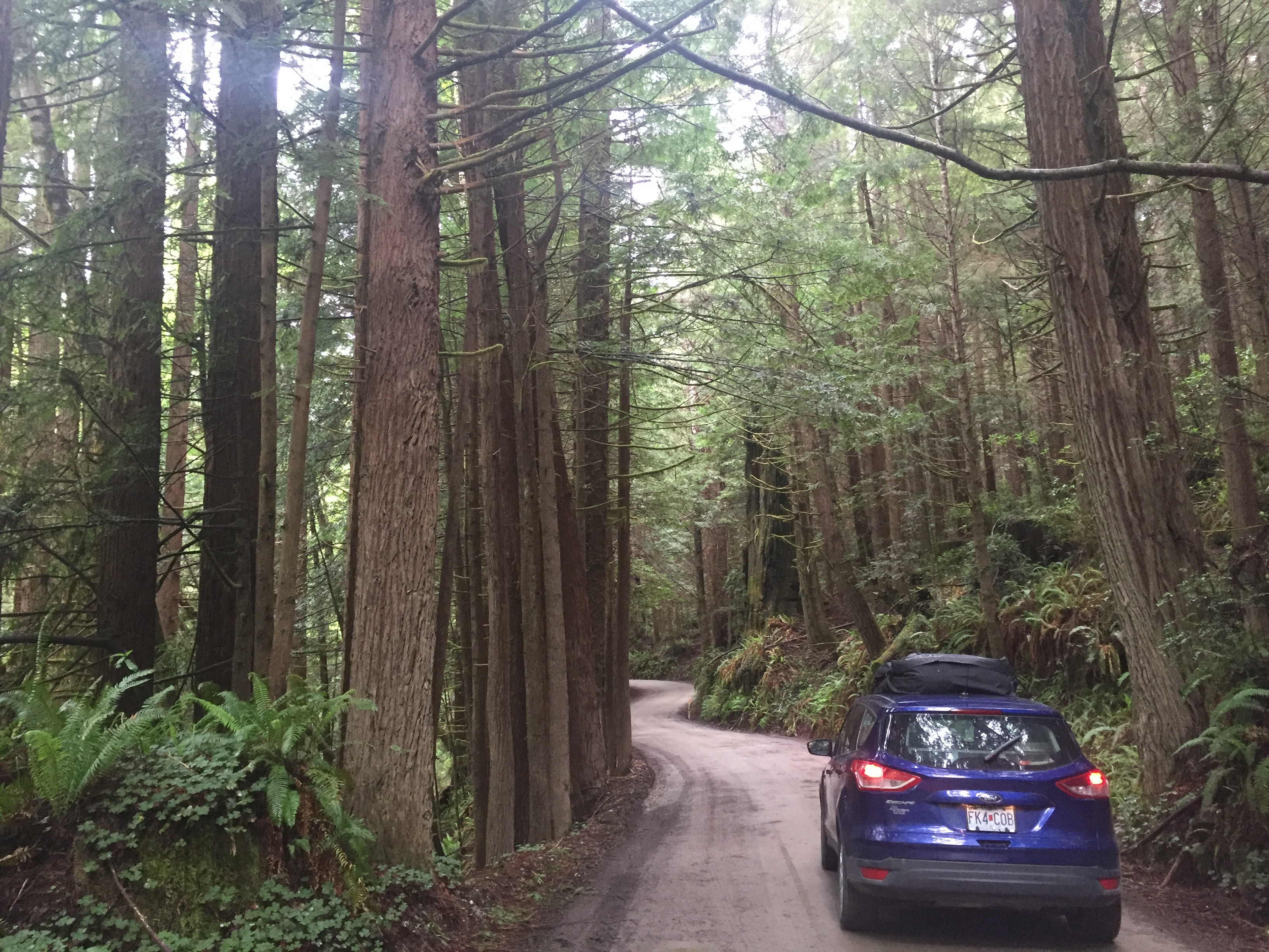 4. Newton B. Drury Scenic Parkway, Redwood National and State Park