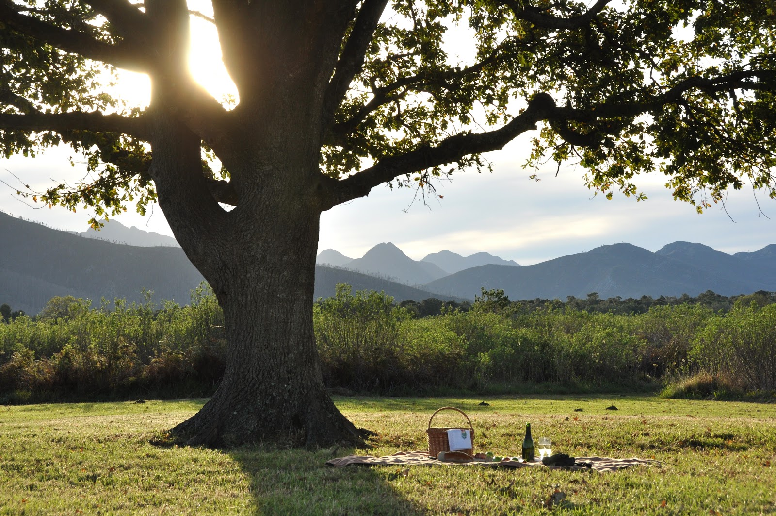 Platbos_Reserve_Oak_Tree_Picnic.JPG