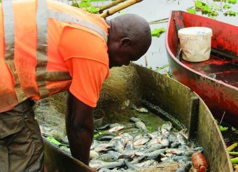 Angola vai criar estrutura nacional de biossegurança