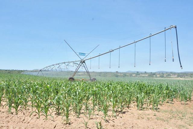 Caxito: Produção agrícola afectada pela escassez de sementes e equipamentos de trabalho